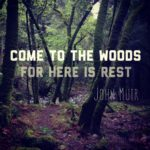 Come to the Woods, for Here is Rest - John Muir