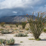 Ocotillo Storm - photo by Jason Fitzpatrick (@themuirproject)