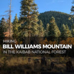 Hiking Bill Williams Mountain